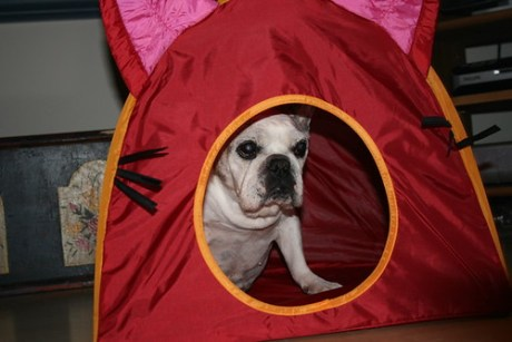 Tessa in the pup tent