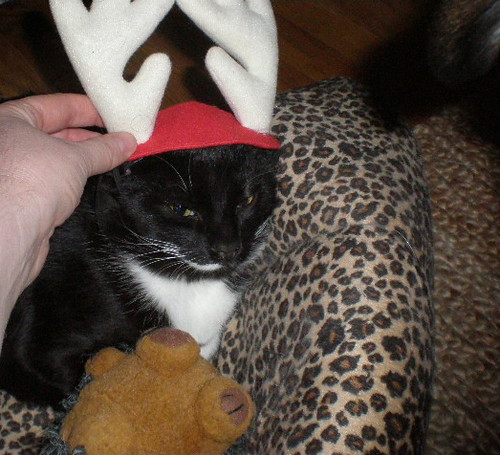 Ollie does not want to inherit the antlers from Puff
