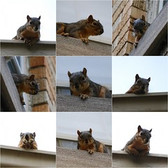 Attack of the Squirrels