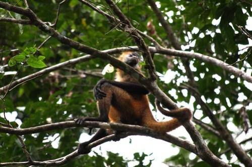 Costa Rica - Día 3 (293)