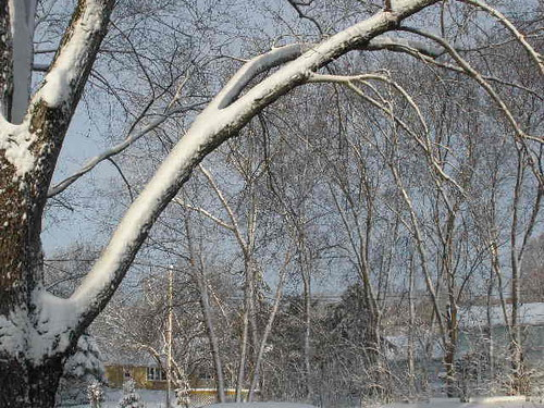 04-01 snowy morning