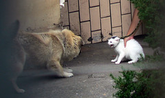 Cats&Dogs fight by nick.kwok