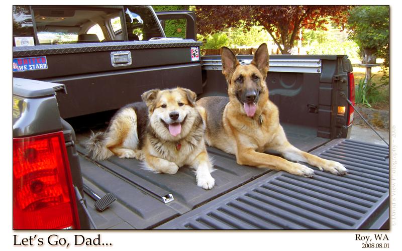 Travlin' Dogs