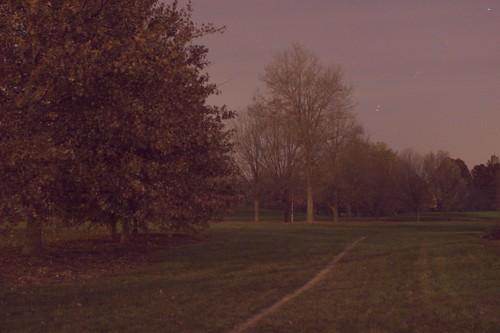 Arboretum at night