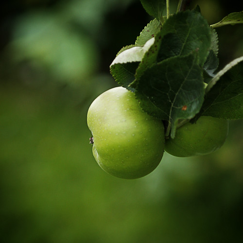 How would a green apple look like?