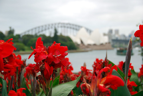 Flores con la Opera House al fondo