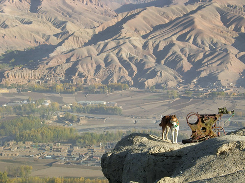 Explosive sniffer dog watches over the Bamiyan Vally, Afghanistan (by Carl Montgomery)