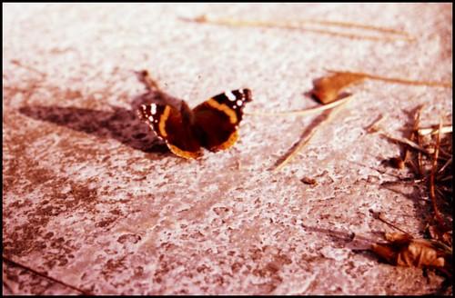 notBUTTER-fly