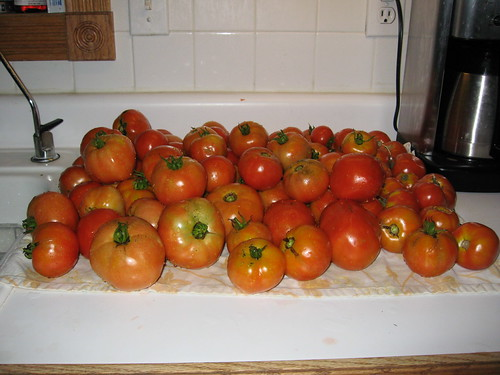 August Tomatoes by you.