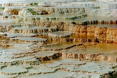 Yellowstone Mammoth Terraces