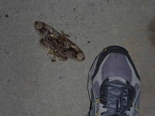 That's a big moth!
