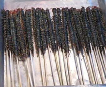 Centipedes on a stick