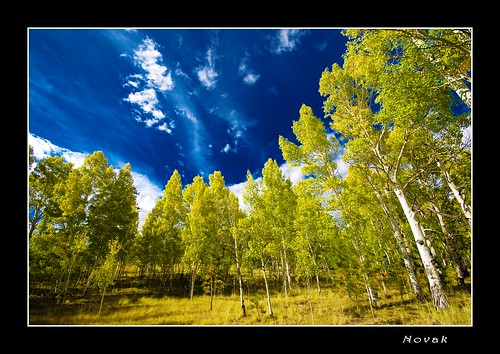 trees sky color tree colors leaves colorado colorful aspen supershot golddragon aplusphoto overtheexcellence betterthangood