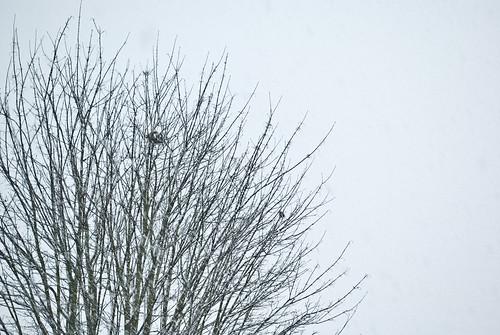 snowdays-23