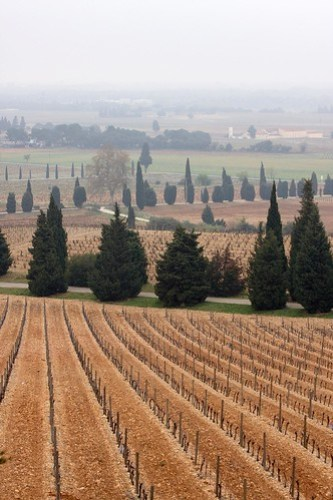 Vignobles à Châteauneuf du Pape