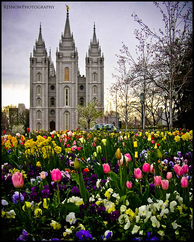 Flowering Temple Square