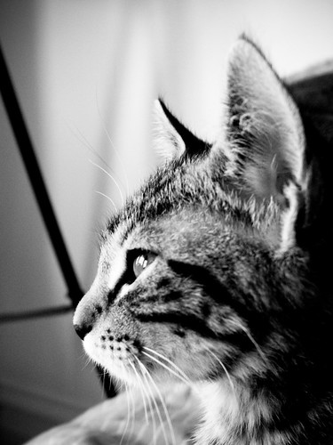 cats_28