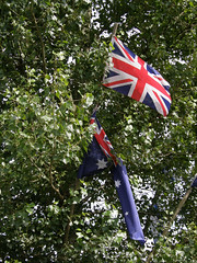 Flags on the Arbour Tree
