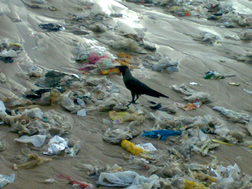 Crow amongst Garbage