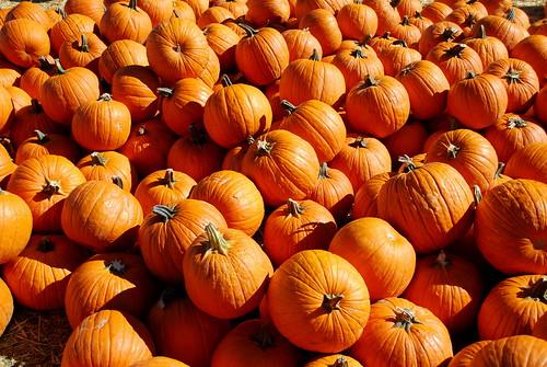 miles o' pumpkins