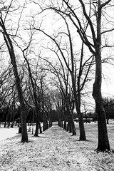 Crystal Palace Park in snow