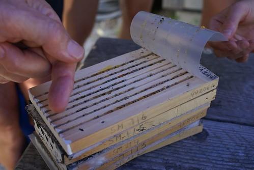 Nest blocks from the bee condo