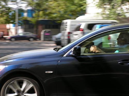 Audi en movimiento