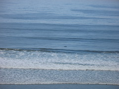 Seascape Dolphins! (3)