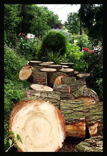 The trunk of the fir tree in the garden path
