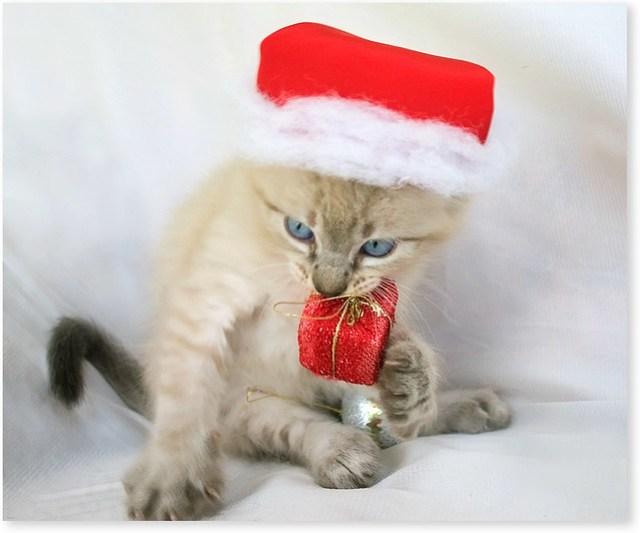 Merry Christmas  ( +3 photos)