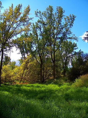 Lynch Creek