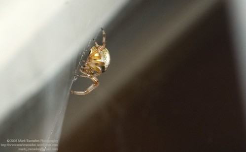 the spider in the window