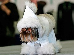The Worlds most Fashionable Dog..