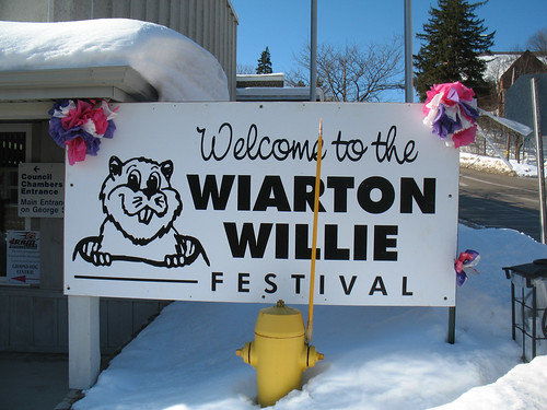 Welcome to Wiarton Willie's Ward