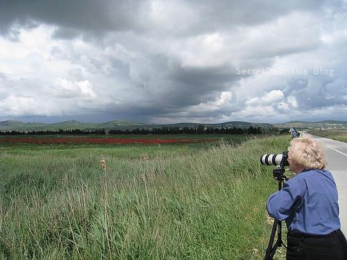 Poppy fields of Vrana