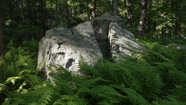 Rock and Ferns