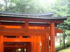 Rain on Fushimi Inari