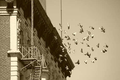 The Pigeon Roost