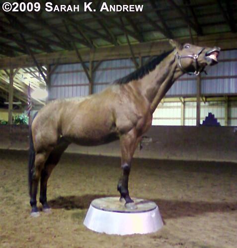Two-Trick Pony...