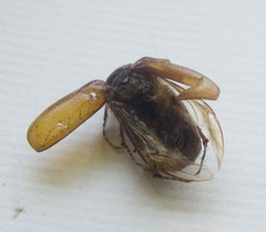 June Bug Snack