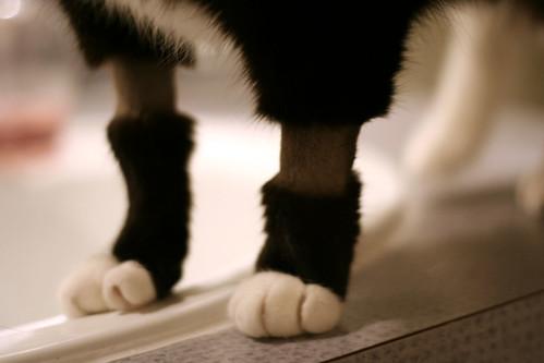 post-op kitty legs