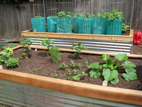 the raised beds