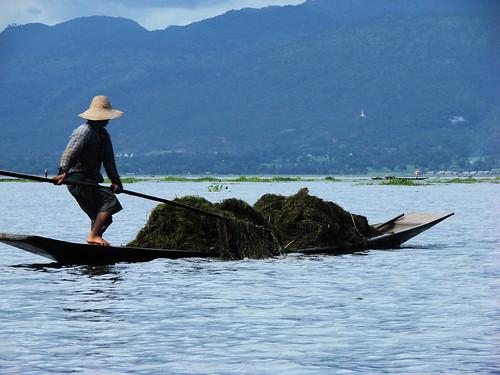 Cosecha de algas