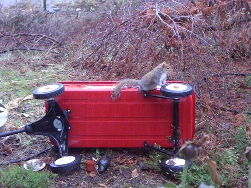 Squirrel atop Radio Flyer red wagon