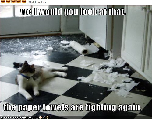 papertowelsfighting