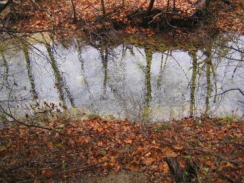 Raindrops in the creek