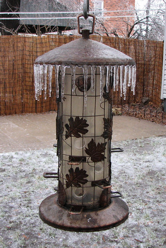 Ice covered bird feeder