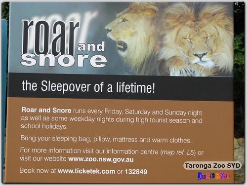 Taronga Zoo - Roar & Snore?