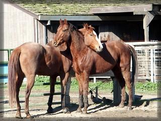 Horse Hugs