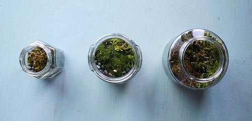 Moss Terrariums {First EVER!}